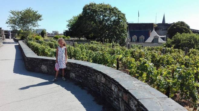 les vignes sur les remparts du château